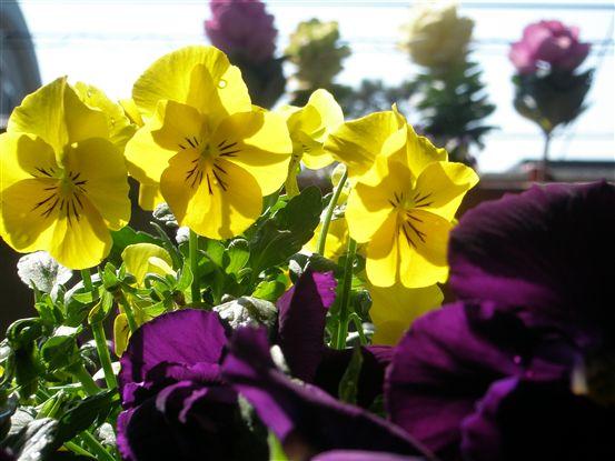 春の色 006.jpg