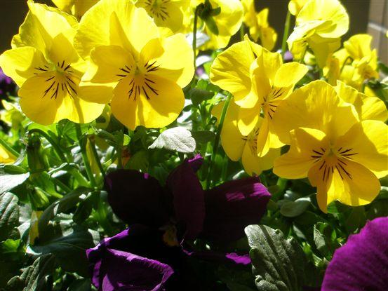 春の色 007.jpg